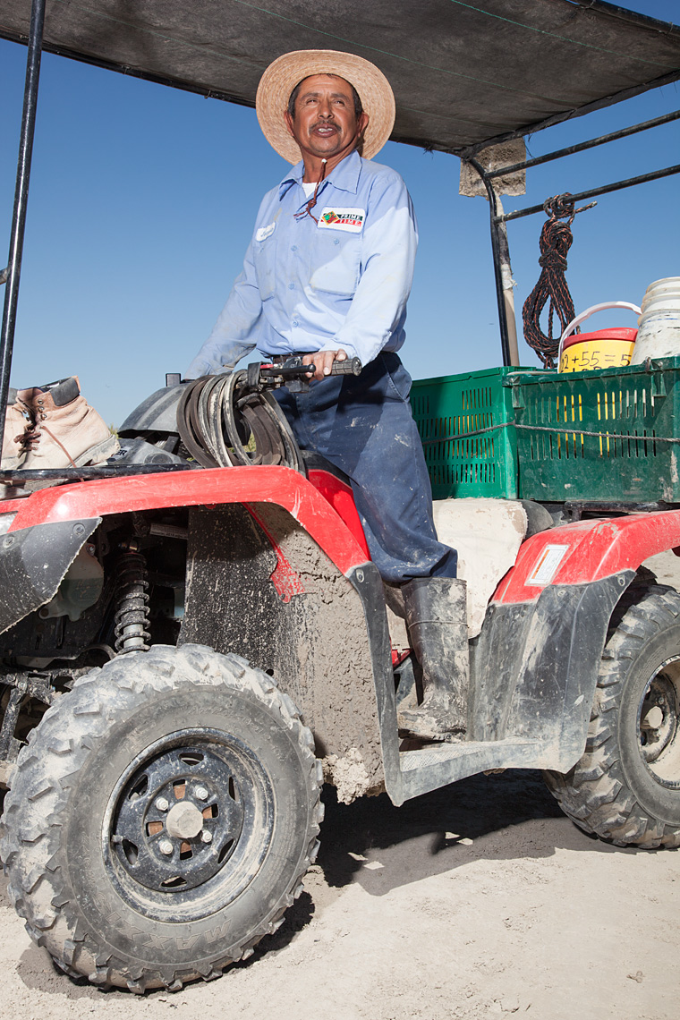 Portrait of farmworker Jeronimo Estrada at work in the Coachella Valley.